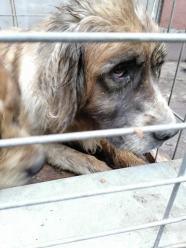 Granice zostały przekroczone! Odebrano ponad 60 psów z pseudohodowli