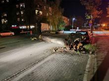 Ulica Oleska w Opolu: Duże drzewo runęło na ulicę
