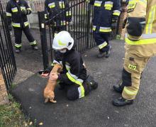 Pies zakleszczył się w ogrodzeniu. Na pomoc ruszyli strażacy