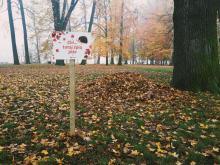 Uważajmy na jeże. W mieście zostawiono specjalne kopce liści