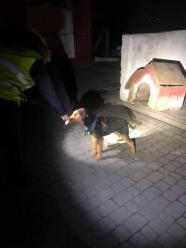 Gmina Głogówek: Łańcuch na szyi psa zaczynał wrastać w ciało