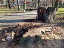 """Ścięto drzewa w Parku Nadodrzańskim. """"To dewastacja nie pielęgnacja!"""""""