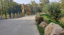 Wiosną do opolskiego zoo wprowadzą się lwy i tygrysy. Wybieg jest prawie gotowy