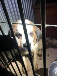 Dramat psów rozgrywał się na plebanii w gminie Grodków