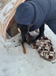 Pies niemal zamarzł w budzie. Interwencja w powiecie brzeskim