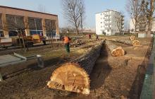 Wycinka drzew przy Liceum nr 1 w Opolu. Przeszkadzały w budowie boiska