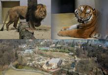 Za wejście do zoo zapłacimy więcej. Ogród zoologiczny tłumaczy skąd podwyżka cen