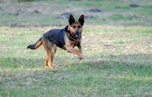 Od 10 kwietnia więcej za naruszenia zapłacą właściciele psów