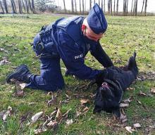 Otel - nowy pies w strzeleckiej komendzie