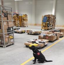"""Czujny nos służbowego psa """"wywęszył"""" tylko w tym roku już 171 kg nielegalnego tytoniu"""
