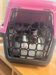 Właściciel trzymał kota w pudełku. Kilka lat...