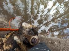 Ratują i leczą dzikie zwierzęta. Ilość pacjentów zaczyna przerastać ich możliwości
