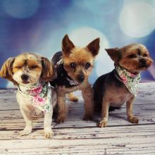 Dziś świętują nasi czworonożni pupile. 1 lipca wpada dzień psa