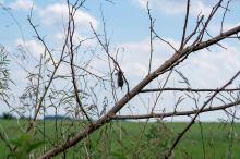 Ciała zwierząt ponabijane na gałęzie. Ciężko uwierzyć kto za tym stoi