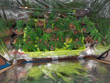 30 krzewów marihuany, kodeina i amfetamina w mieszkaniu 19-latka
