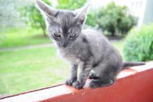 Dziś swoje międzynarodowe święto obchodzą wszystkie...koty!