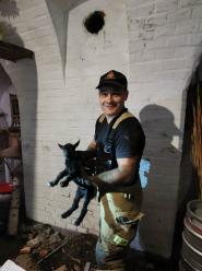 Koza wpadła do komina. Pomogli strażacy z Nysy