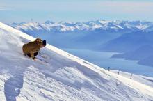 Sprawdź, co zyskasz, gdy kupisz ubezpieczenie narciarskie