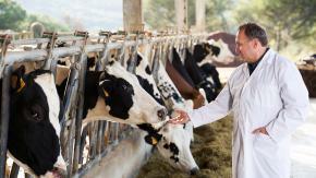 Nauczyli krowy korzystać z toalet. Idea jest poważna