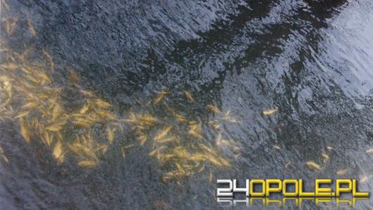 Wpuścił do rzeki kilkaset śniętych ryb