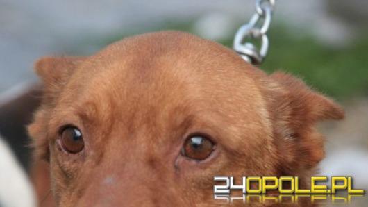 Ponad 200 zwierząt z opolskiego schroniska czeka na drugi dom