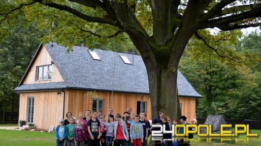 Dąb Dzidek wśród 16 najpiękniejszych drzew w Polsce