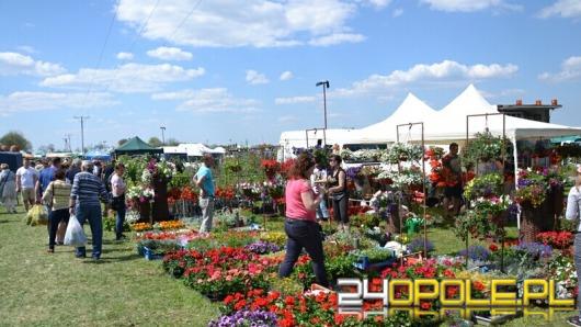 Tłumy ludzi odwiedzają Wiosnę Kwiatów w Łosiowie