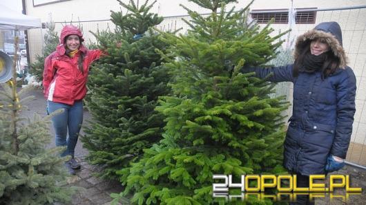 Jak dbać o świąteczne drzewko?
