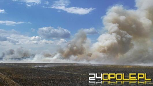 Duży pożar jęczmienia w Dobiercicach