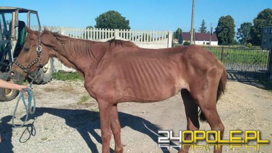 Interwencja TOZ-u w Ligocie Prószkowskiej. Zabrano 17 psów i ledwo żyjącego konia