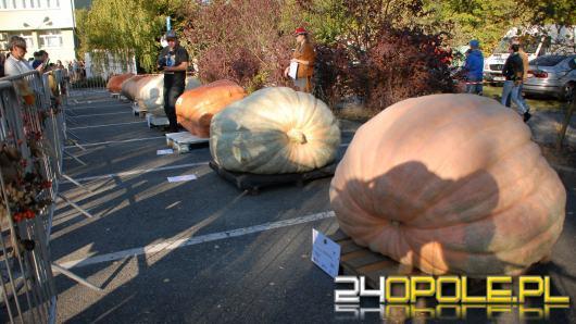 Najcięższa dynia na Bania Fest w Krapkowicach ważyła 746,5 kg