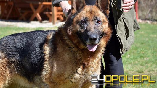 Historia psa Dino poruszyła Polskę, tymczasem decyzją prokuratury pies może wrócić do oprawcy