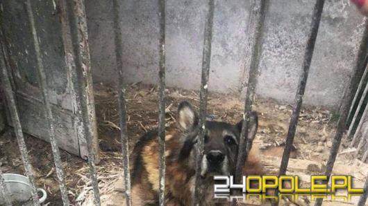 """Inspektorzy TOZ odebrali z """"hodowli"""" 10 psów. Żyły w makabrycznych warunkach"""