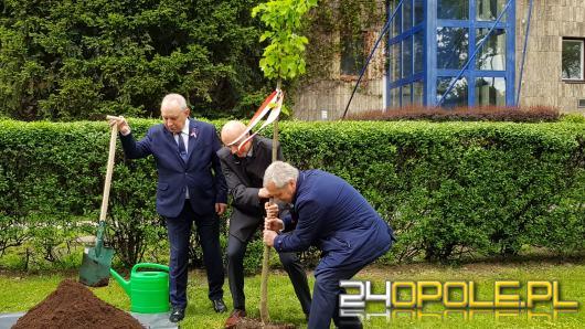 Lipa pod Urzędem Wojewódzkim. Wojewoda po raz 4. wkopał symboliczne drzewko