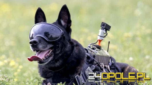 """Rico - najdzielniejszy """"Policjant"""" w Polsce"""