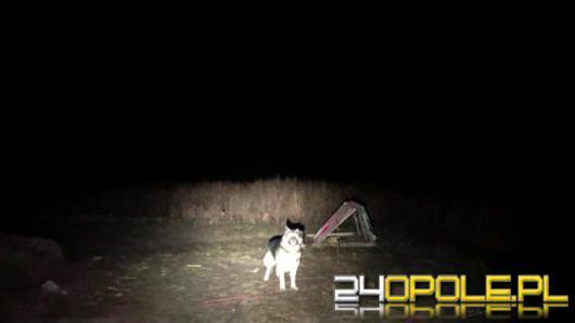 Pies przywiązany na środku pola w gminie Pokój. Czy interwencja TOZ będzie miała szczęśliwy koniec?
