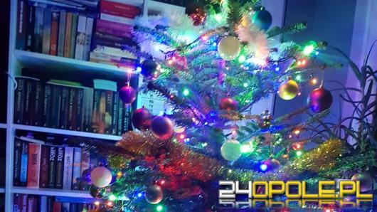 Żywa czy sztuczna? To ostatnia chwila na zakup świątecznego drzewka