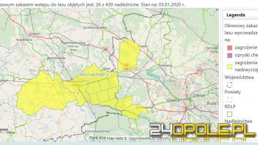 Wydano nadzwyczajny zakaz wstępu do lasu w obrębie Kędzierzyna-Koźla
