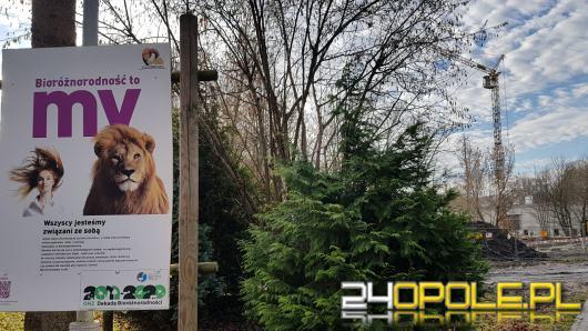 W opolskim zoo nie ma czasu na odpoczynek. Wznosi się pawilon dla lwów i tygrysów