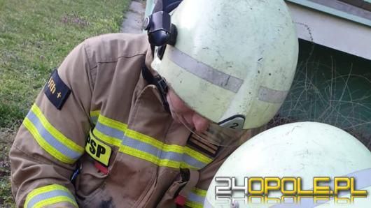 Strażacy z Kędzierzyna-Koźla przeprowadzili akcję ratunkową...gołębia