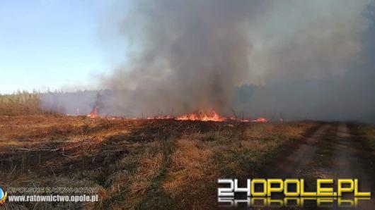 Kilkanaście zastępów straży gasi pożar lasu w powiecie kluczborskim. W akcji również dromader