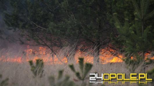 Pożar lasów wokół czarnobylskiej elektrowni - sytuacja radiacyjna w Polsce pozostaje w normie