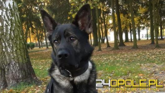 Nowy pies w służbie brzeskiej policji