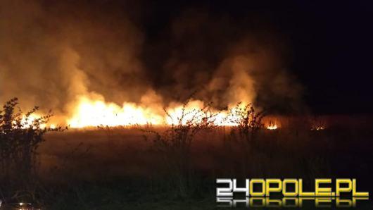 Strażacy gasili nocą pożar nieużytków. Służby apelują o rozwagę