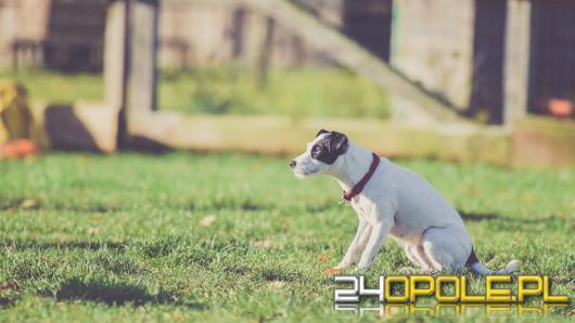 Jak wybrać odpowiednią obrożę dla psa? Praktyczny poradnik