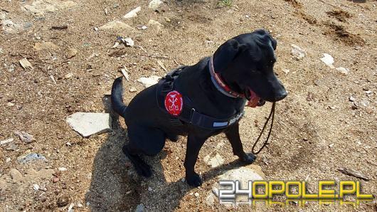 Pies Hunter wywęszył narkotyki warte około 70 tysięcy złotych