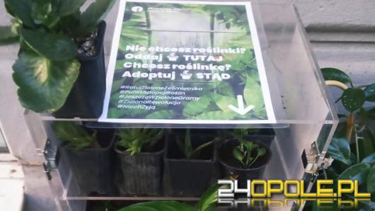"""W Opolu powstało """"okno życia"""". Możemy tam zarówno zostawić jak i zabrać...kwiaty"""