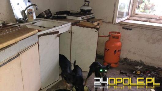 Odebrano schorowanej właścicielce 16 psów. Warunki były dramatyczne!