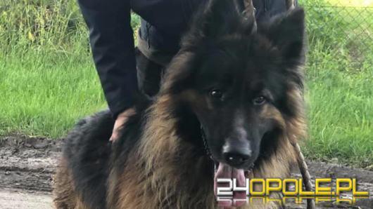 Wolontariusze opolskiego TOZ-u zabrali interwencyjnie 3 psy i kota