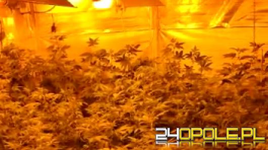 1,7 kg gotowego narkotyku, i 448 krzewów marihuany w nieruchomości 29-latka